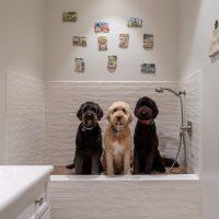 Designing a Successful Dog Shower