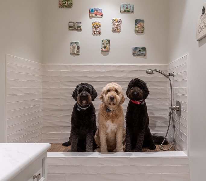 How to Create a Beautiful and Functional Dog Wash